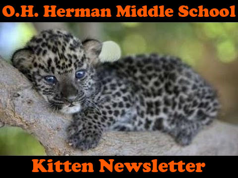 November 2016 Kitten Newsletter